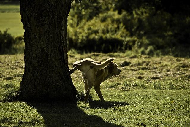 dog pee in tree