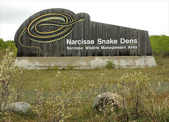 narcisse snake dens