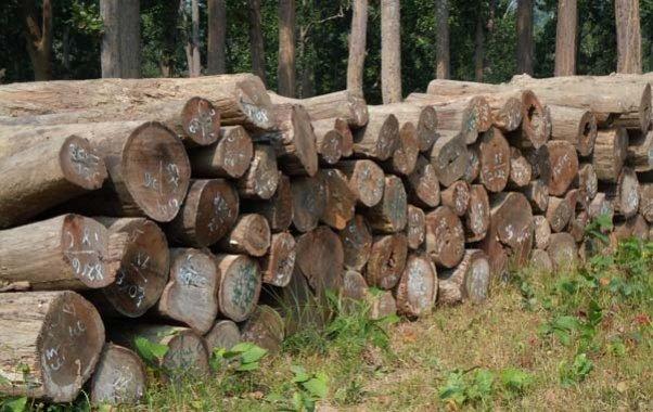 katha wood